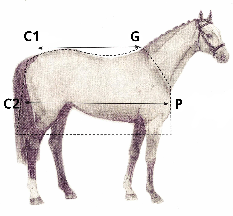 Misurare coperta su cavallo